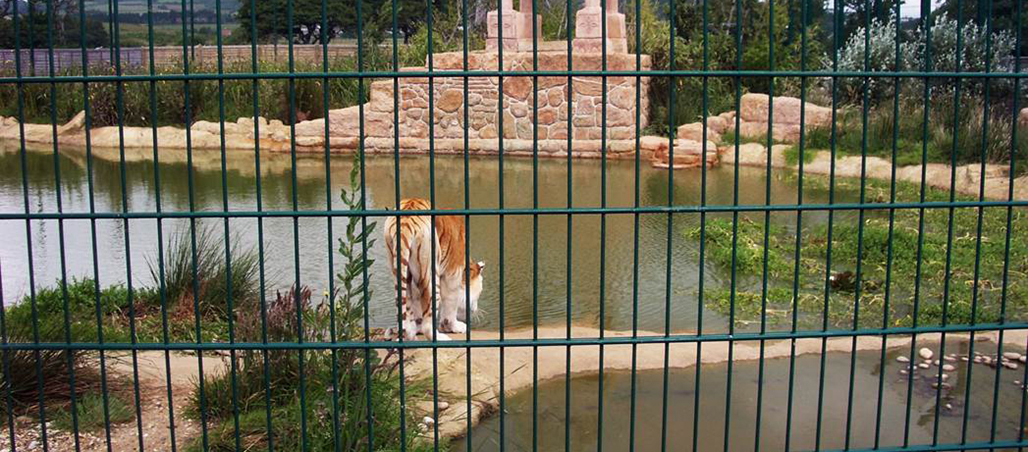 Big cats aplenty as hunt for zoo orders becomes a stampede